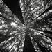 Youthful Redwoods by J.Sod