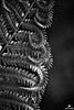 Fern Patterns in Black and White by Jim Crotty