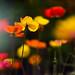 Like butterflies by rvtn