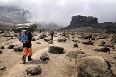 Porters near Lava Tower - Kilimanjaro National Park - Tanzania