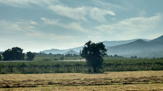Peralillo, Valle de Elqui, Chile