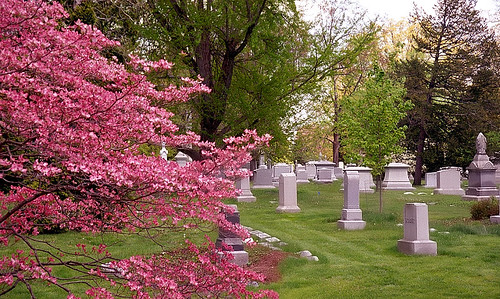 "Cincinnati – Spring Grove Cemetery & Arboretum ""Springtime Burst"""