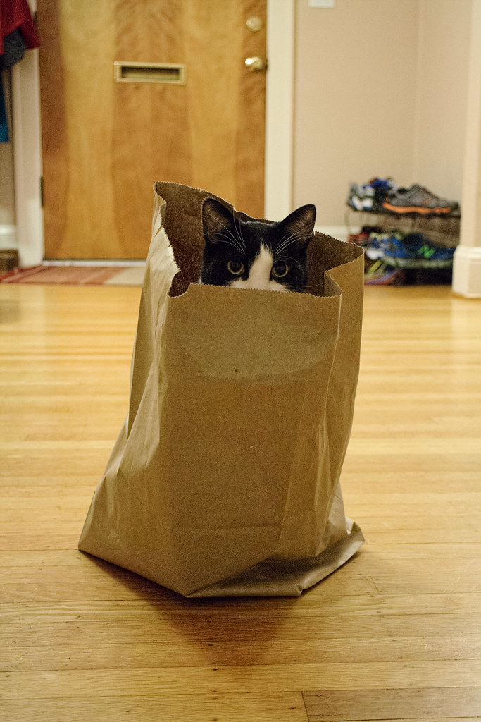 Our black-and-white cat Boo sits in a paper bag
