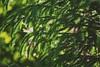 #green#tree#garden#pink#shadow#sun#rays#