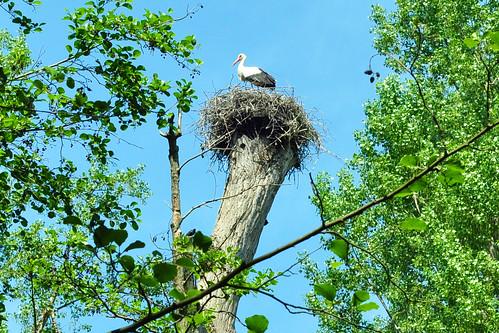 Wildpark Ludwigshafen Rheingönheim