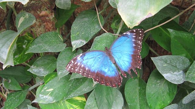 Schmetterlingsfarm (5a)