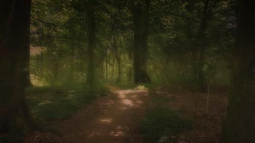 forest denmark dreams skov skovby midtjylland lensdistortions mextures harlevj