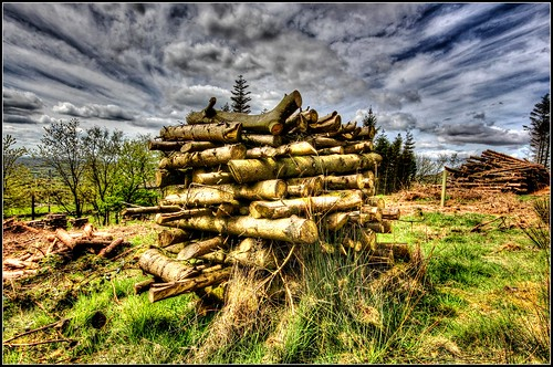 The woodpile...
