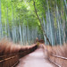 Bamboo Walk by .mushi_king
