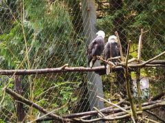 Portland Zoo 20140214