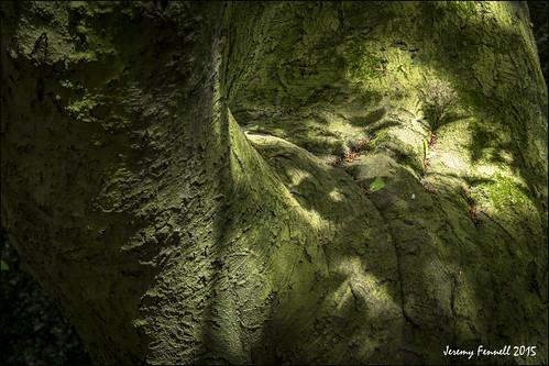 uk trees england southwest nature woodland may blaise 2015 blaisecastleestate blaisecastleestatebristol nikond7100 photographybyjeremyfennell blaiseinmay