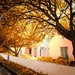colours of autumn in greyton