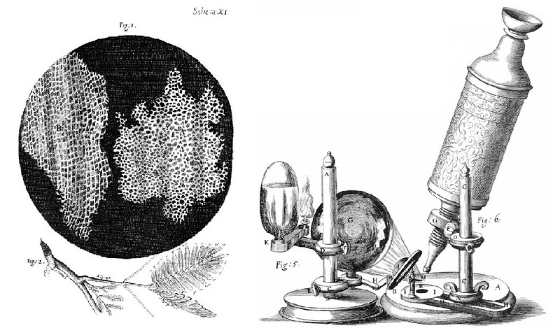 Cell structure of Cork and microscope, from an engraving in Hooke's Micrographia