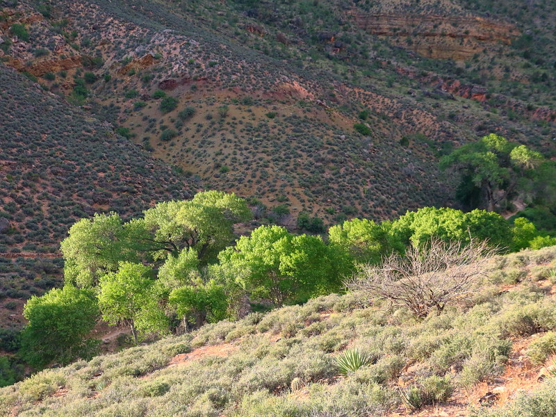 IMG_5812 Plateau Point Trail