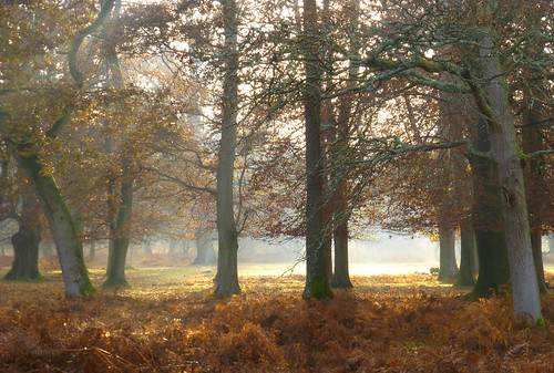 uk trees winter england forest woodland nationalpark hampshire lyndhurst dennywood newforestnationalpark worldtrekker