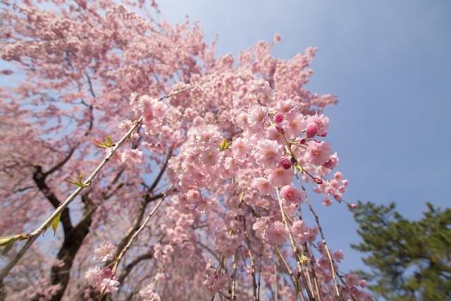 Hirosaki day 07