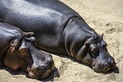 Zoo Antwerp