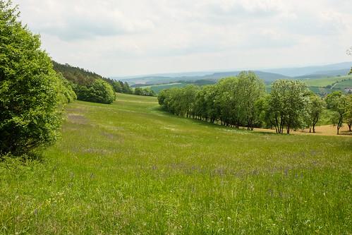 2015-05-24 Weimar Goethewanderweg 0142.jpg