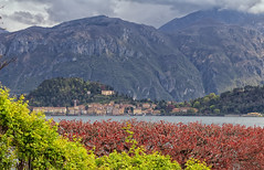 Bellagio from Villa Carlotta