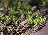 Mabijeong Tiny Plants