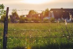Fence #148/365