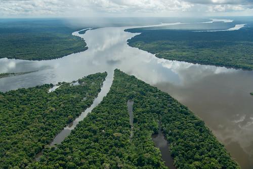 亞馬遜雨林。(來源:Zig Koch / WWF)