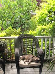 Lazy verdant