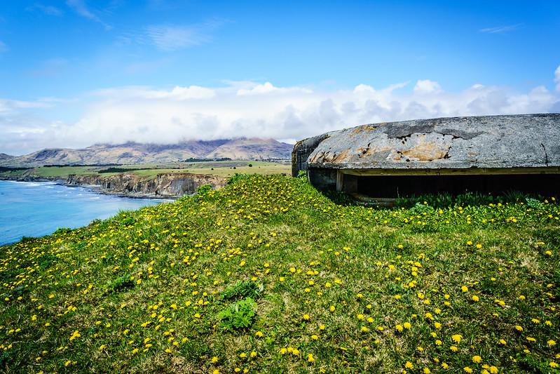 Dandelion Bunker