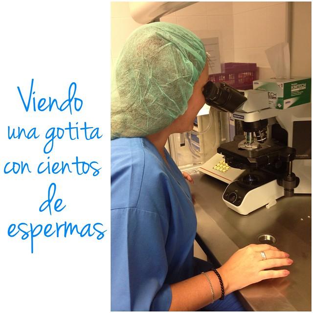 espermatozoides en microscopio