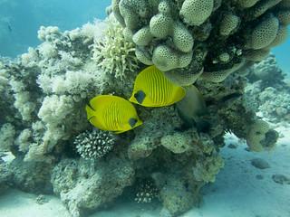 Hurghada 28-4-2016
