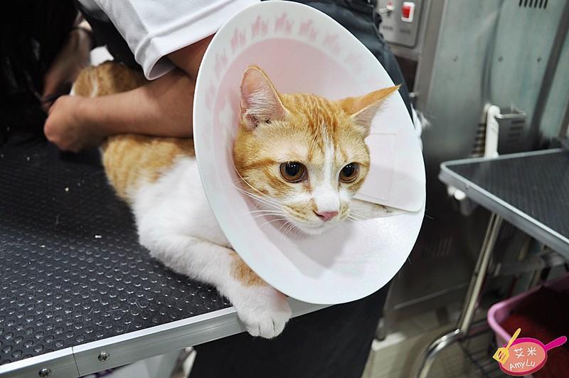 貓咪美容-台中貓旅館瑋特
