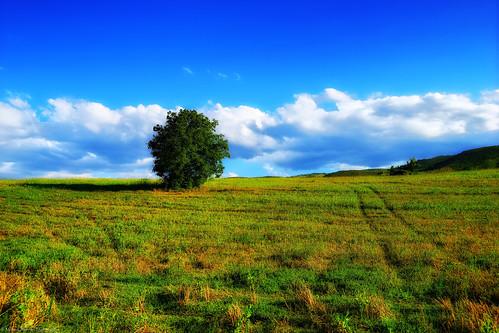 italy panorama tree nature landscape scenery path sentiero albero hdr abruzzo capestrano a99 sonyalpha