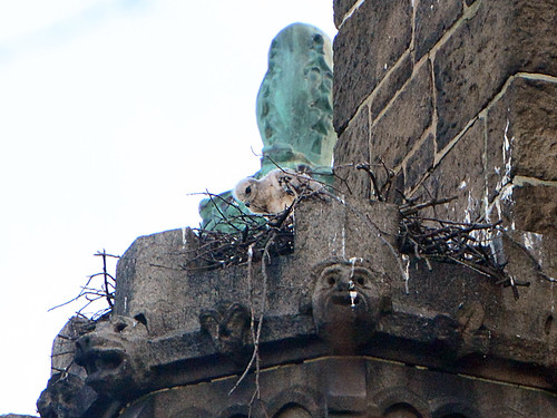 Cathedral Hawk Nestling - 8314