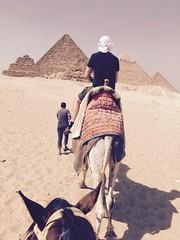 wadi(0.0), pyramid(1.0), aeolian landform(1.0), natural environment(1.0), monument(1.0), desert(1.0), landscape(1.0), camel(1.0), arabian camel(1.0),