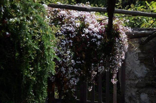 a week of jasmine