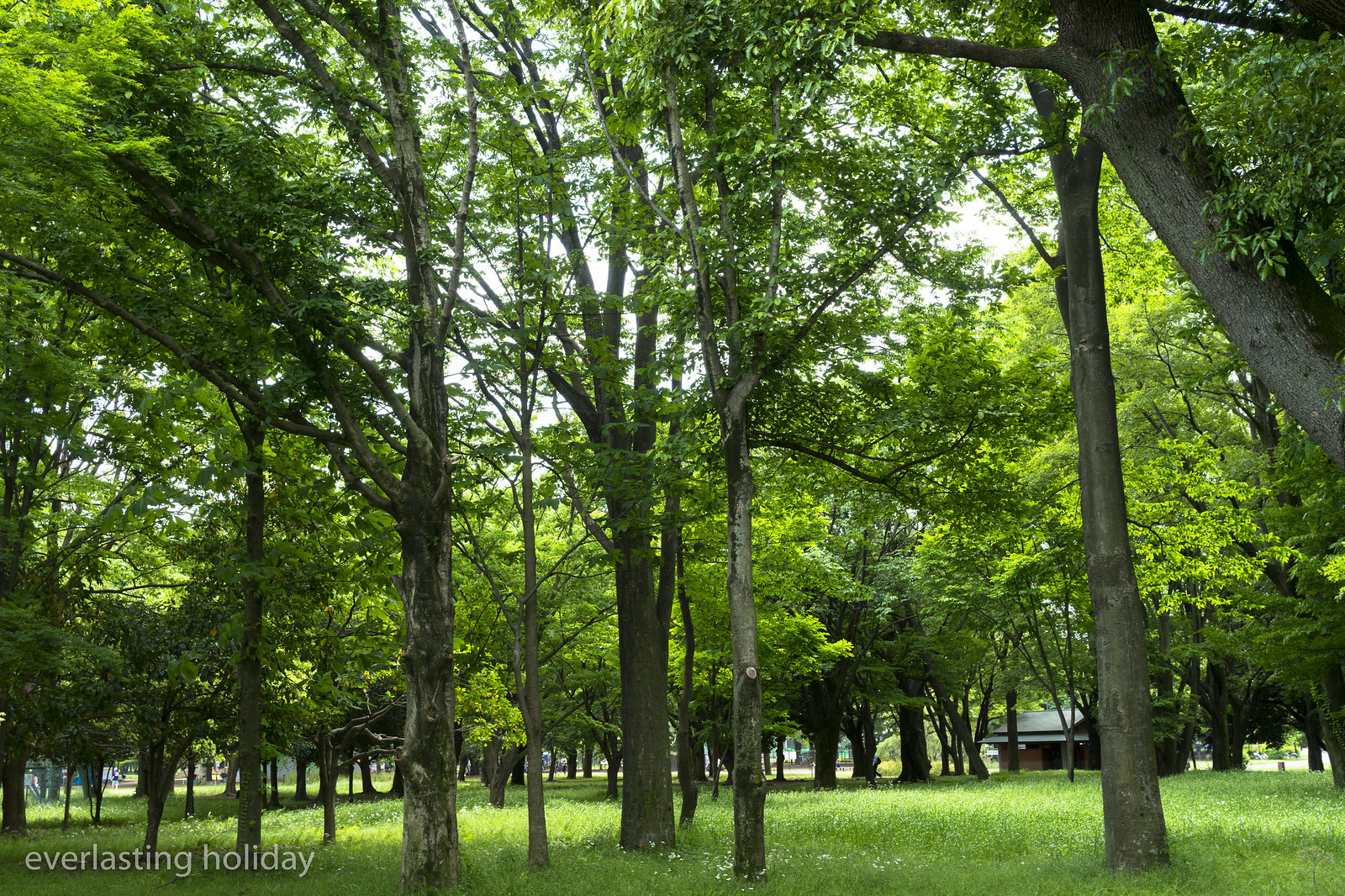小金井公園 Koganei Park-0022