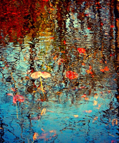 art beauty reflections pond may quotes impressionism lilypads queensburyny