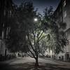 The Street Tree