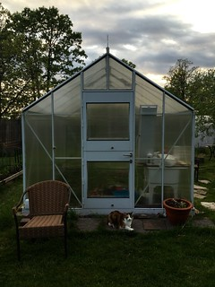 The cat, her chair, and her greenhouse.