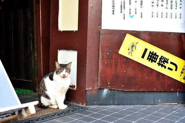 大須商店街8