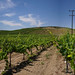 Temecula Wineries Panorama 3