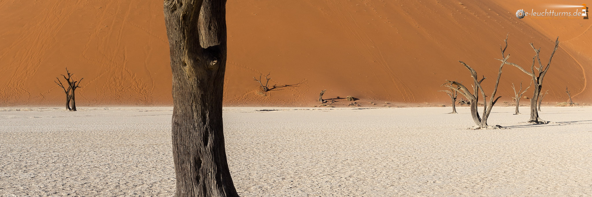 Deadvlei close-up