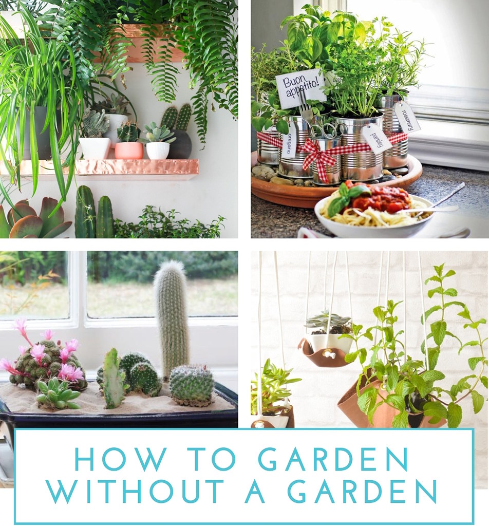How to Garden without a Garden - The Homes I Have Made