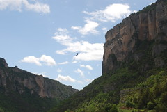 Vulture in the Gorges de LA Jonte