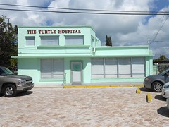 The Turtle Hospital