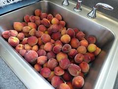 starr-160408-0712-Prunus_persica_var_persica-fruit_harvest-Hawea_Pl_Olinda-Maui