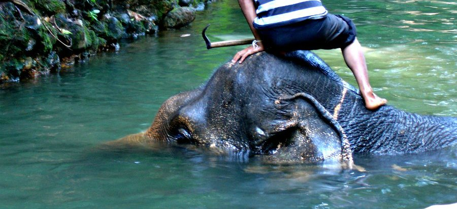 Should You Ride Elephants in Thailand? Mahouts
