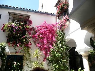 Cordoue et ses patios fleuris