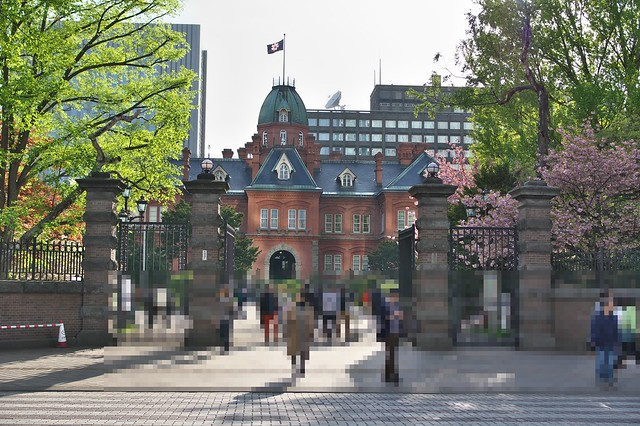 20160514北海道庁の桜_01