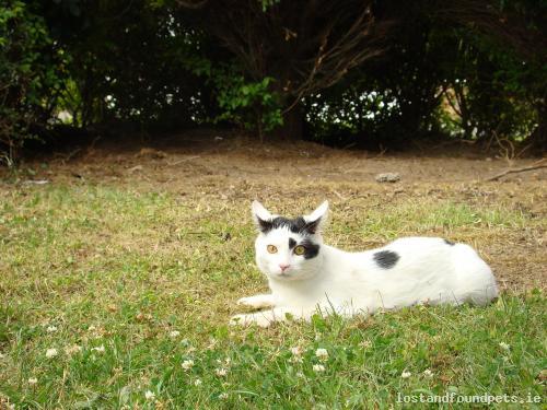 Sun, Apr 26th, 2015 Lost Male Cat - Sallins Road, Naas, Kildare